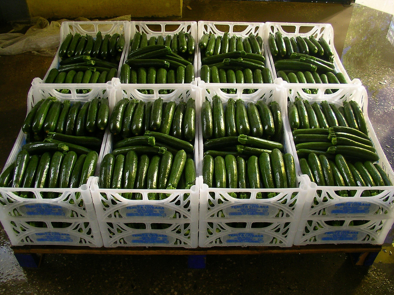 zucchine dell'orto