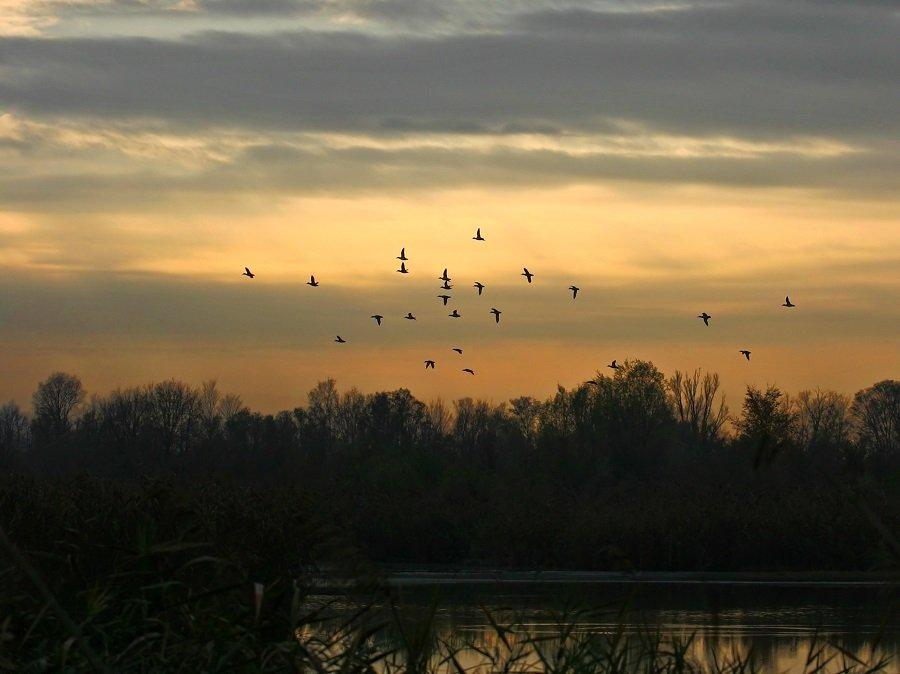 Uccelli in volo al tramonto