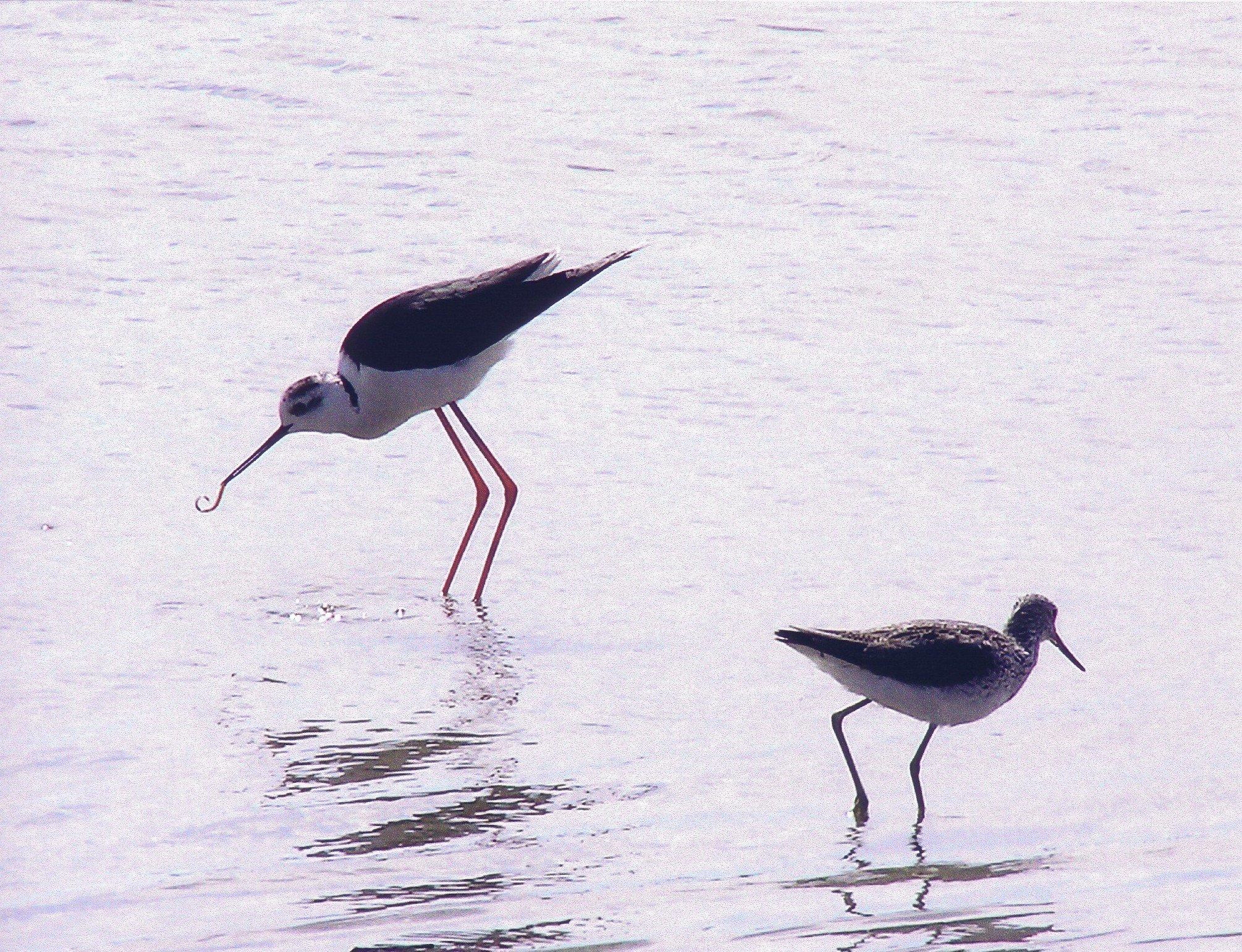 uccelli in acqua