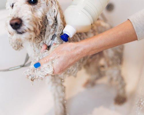 lavaggio di un cane