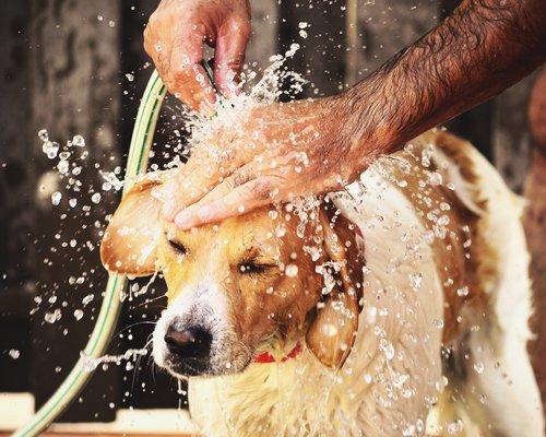 lavaggio cane con pompa