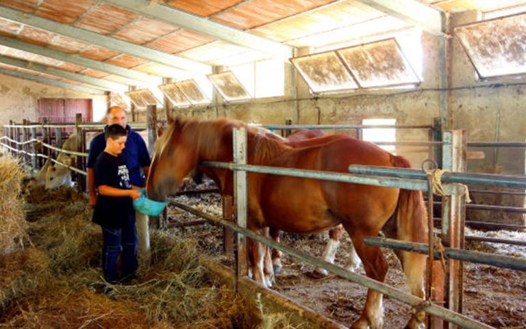 cavalli, allevamento di cavalli, allevamenti suini, maiele nero reatino, maiale reatino, maiale dell
