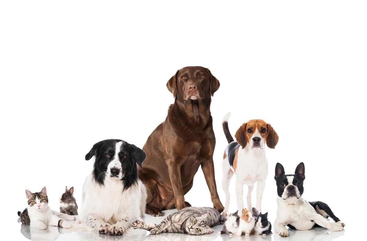 pets Dynamite Pest Control
