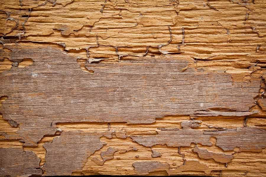 Dynamite Pest Control eaten wood