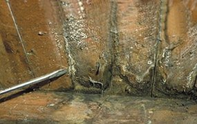 wet and dry rot treatment