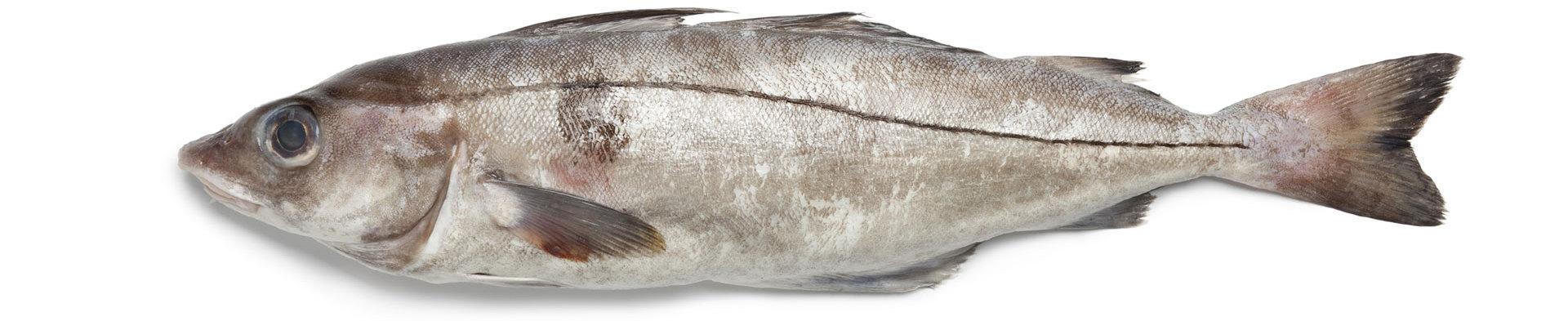Fresh Fish Jericho, NY