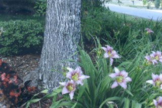 Tree Service Greensboro, NC
