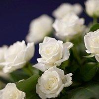 Servizi floreali Onoranze Funebri Parini