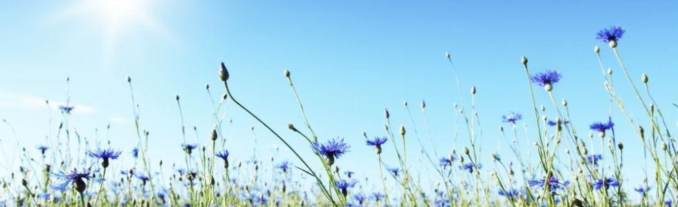 prato in fiore_igiene ambientale
