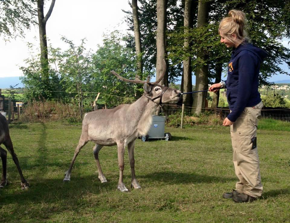 alpacas animal carers in Sheffield