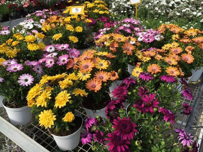 fiori vari colori in vendita
