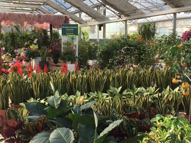 piante da esterno e interno in vendita