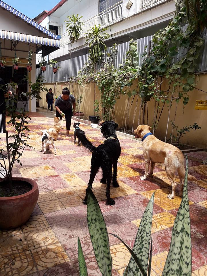 dogs playing house of hounds dog daycare boarding