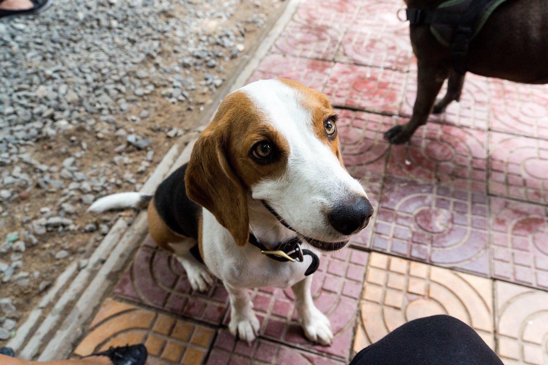 beagle house of hounds daycare boarding