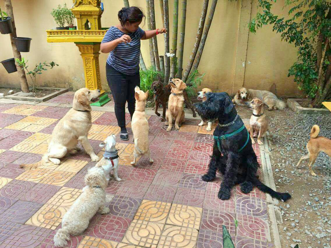 dogs loving treats house of hounds dog boarding daycare