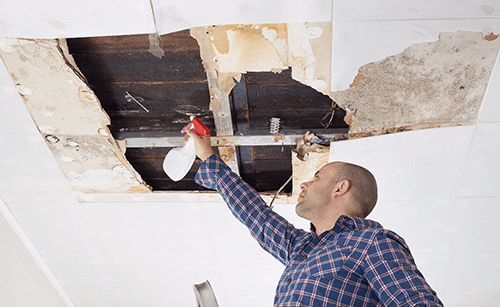 Expert Mold Removal in Cincinnati