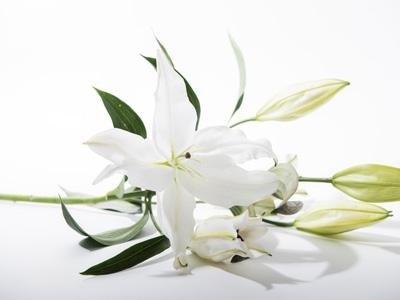 Organizzazione funerali completi Binasco - Milano
