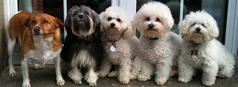 Groomed dog breeds