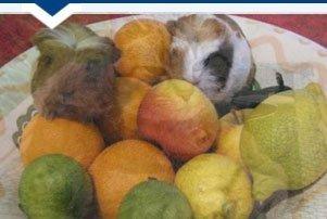 pet health advice