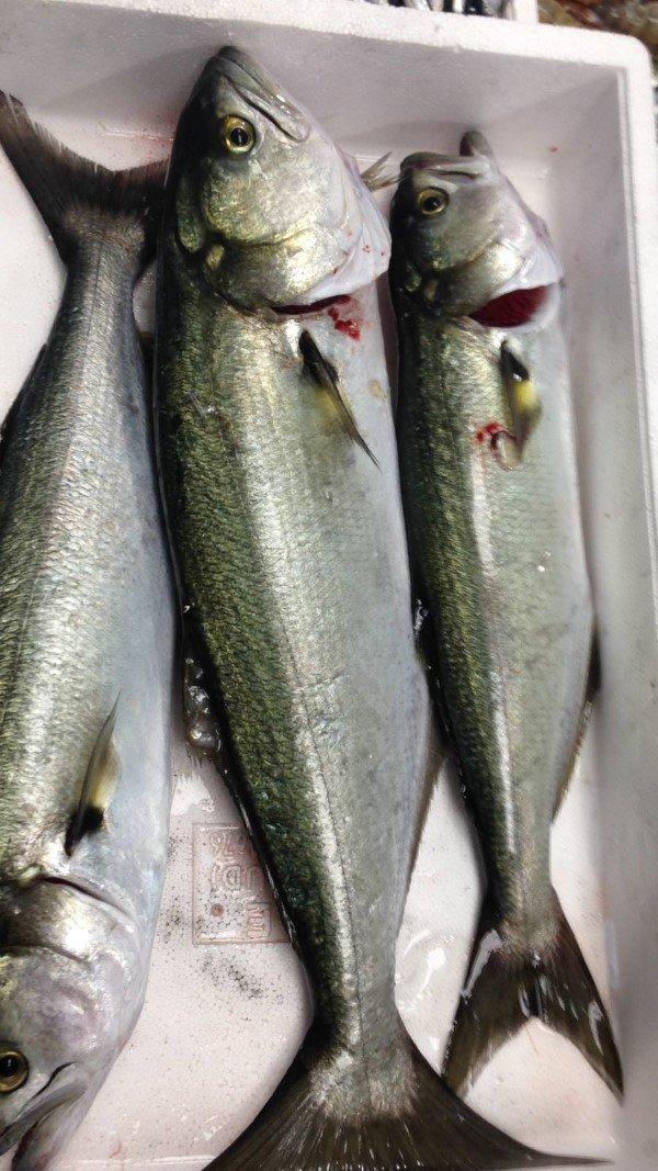 branzini pescati freschi a trieste