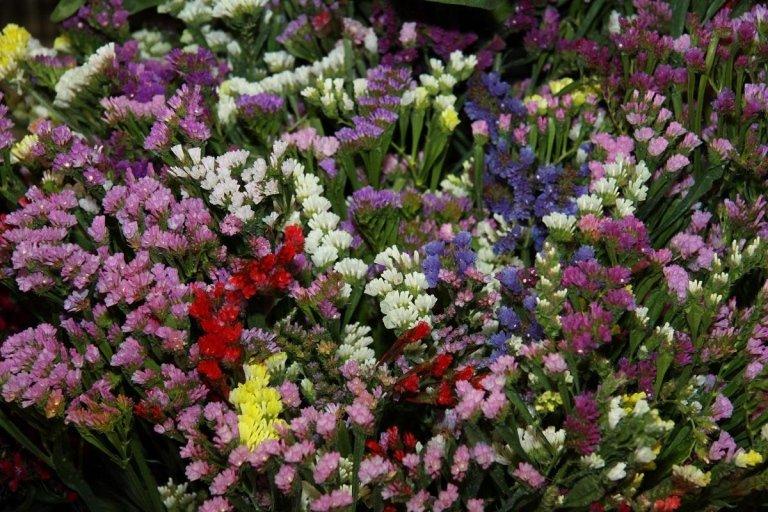 Zeverino Pietro - Boutique del fiore