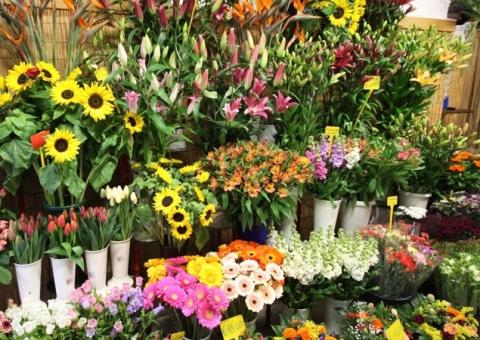 Fiori e piante - Zeverino Pietro