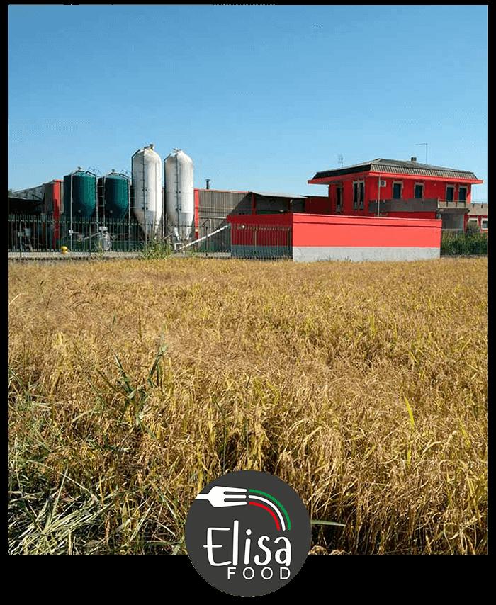 Alimenti convenzionali e senza glutine