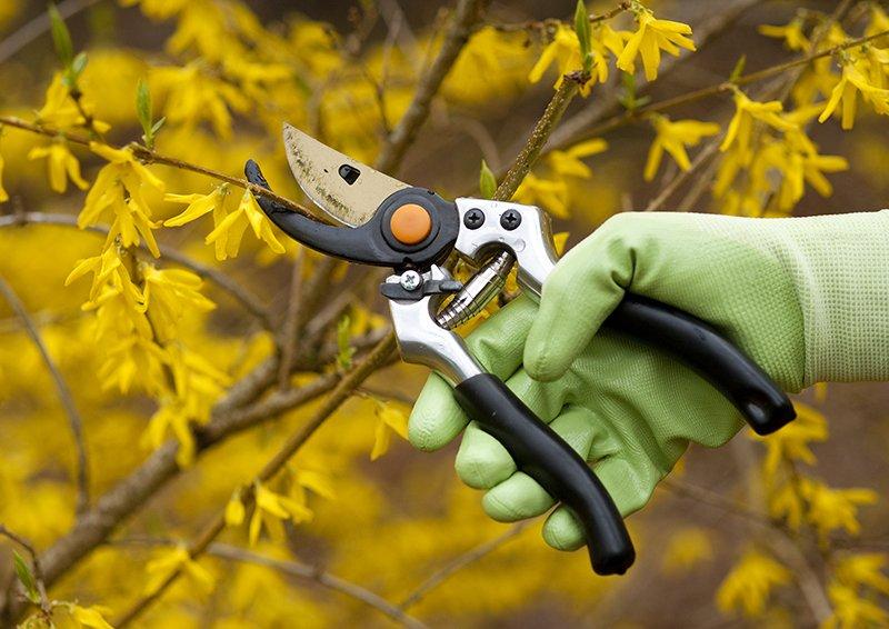 una mano con un tronchesino che pota dei rami
