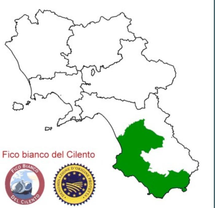 Area giografica fico bianco del Cilento