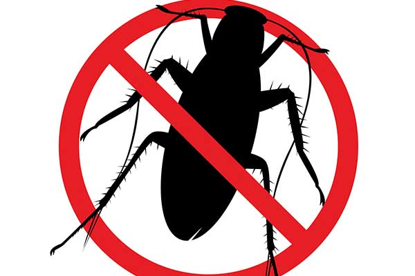 Pest control services  in Trenton