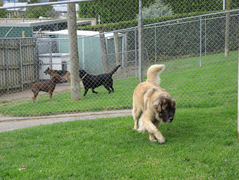 cute dog walking in yard