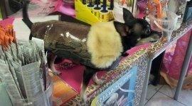 accessori per animali, dog sitter, toelettatura animali