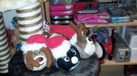 animali domestici, accessori per animali, toelettatura animali