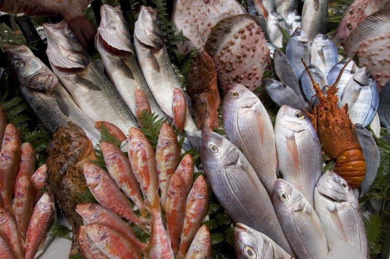 pesci di mare e lago