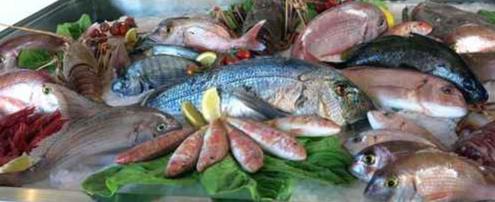 pesce di mare e di lago