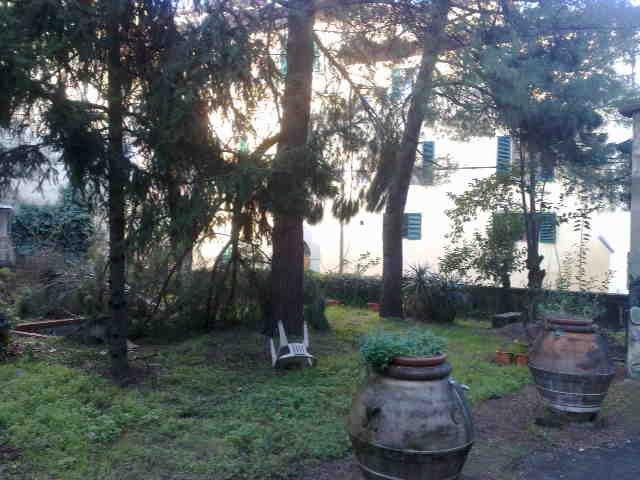 un terreno con dei pini e due vasi grandi di terracotta