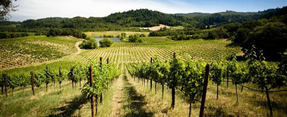 vendita prodotti per viticoltura Agrimarca