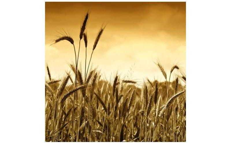 consulenza aziende agricole Agrimarca srl