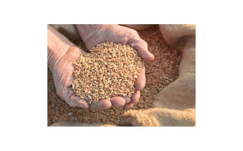 sementi per agricoltura Agrimarca srl