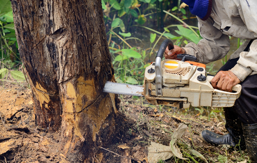Equipment for tree removal services in La Crosse, WI