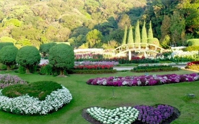Fiori e piante stagionali