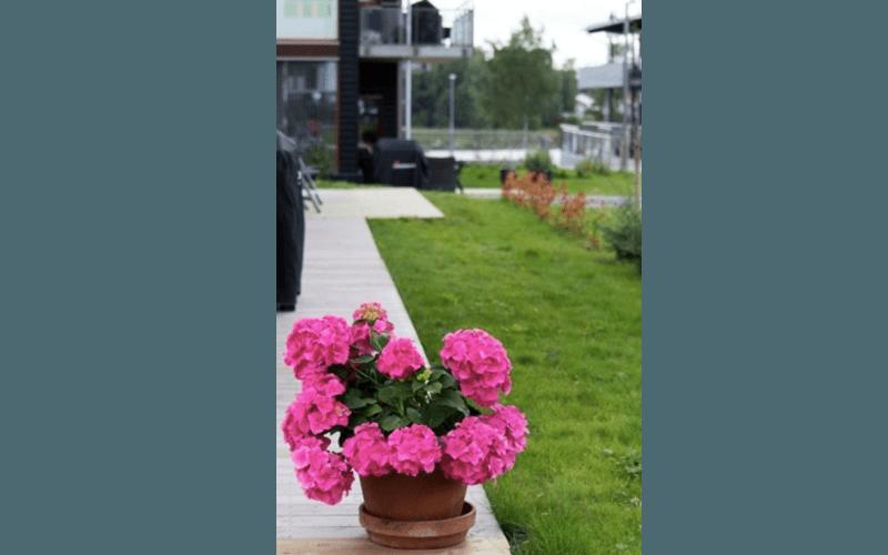 Manutenzione periodica giardino
