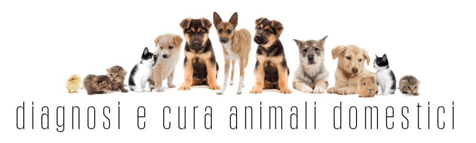 Diagnosi_cura_animali_domestici