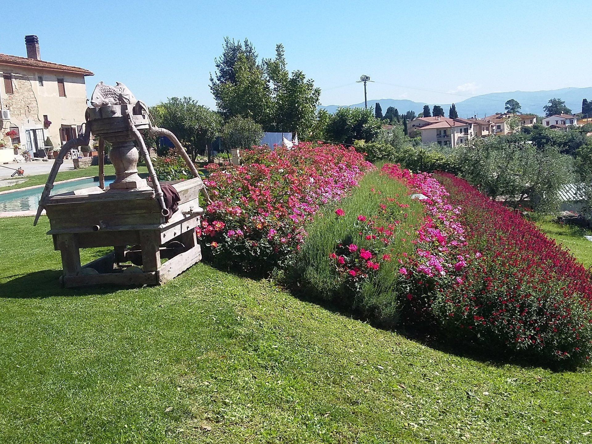 Realizzazione giardini giardini pensili giardini for Realizzazione giardini pensili