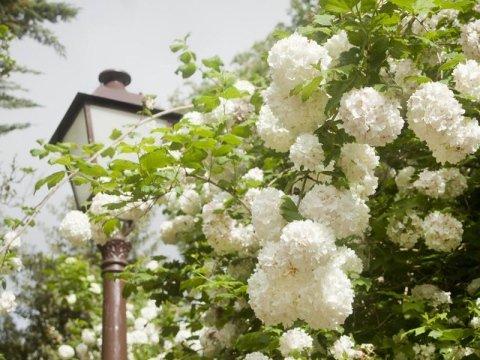 Illuminazione da giardino firenze il giardiniere
