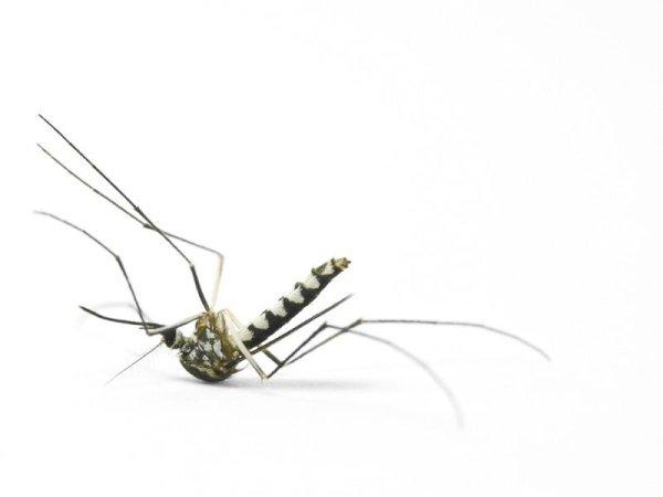 Impianti anti zanzare