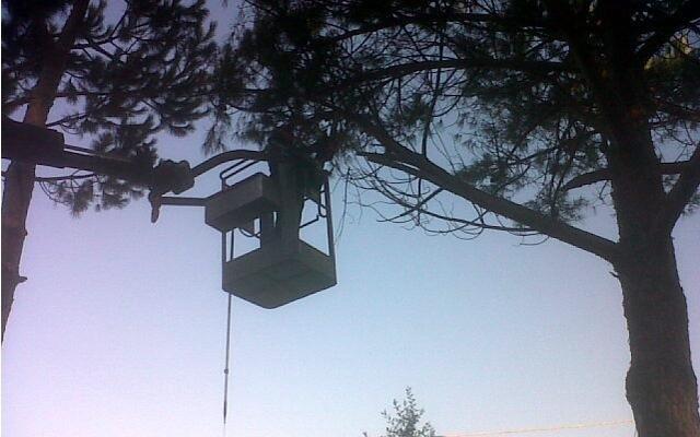 Potature alberi alto fusto