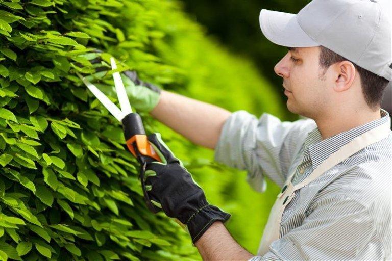 Potatura piante basso fusto