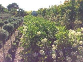 Realizzazione e progettazione giardini