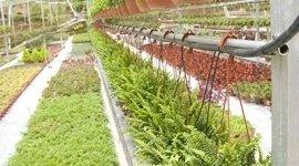 rivendita piante